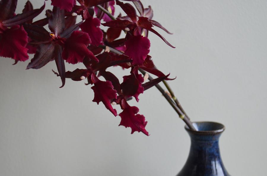 Lilas fleurs anglet